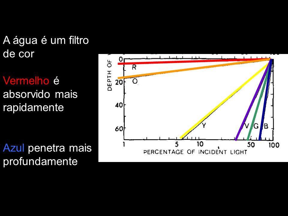 A água é um filtro de cor Vermelho é absorvido mais rapidamente Azul penetra mais profundamente