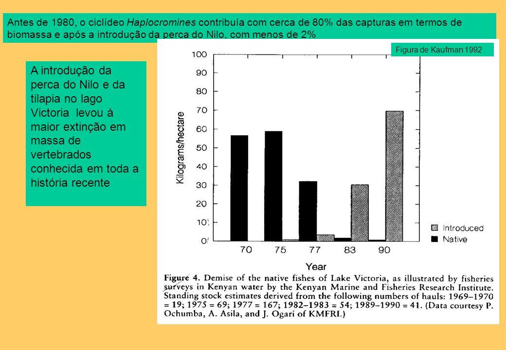 Antes de 1980, o ciclídeo Haplocromines contribuía com cerca de 80% das capturas em termos de biomassa e após a introdução da perca do Nilo, com menos de 2%