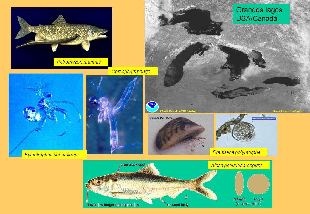 Grandes lagos USA/Canadá Petromyzon marinus Cercopagis pengoi