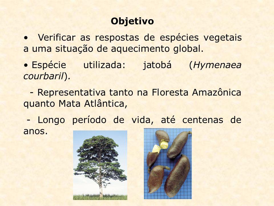 Objetivo Verificar as respostas de espécies vegetais a uma situação de aquecimento global. Espécie utilizada: jatobá (Hymenaea courbaril).