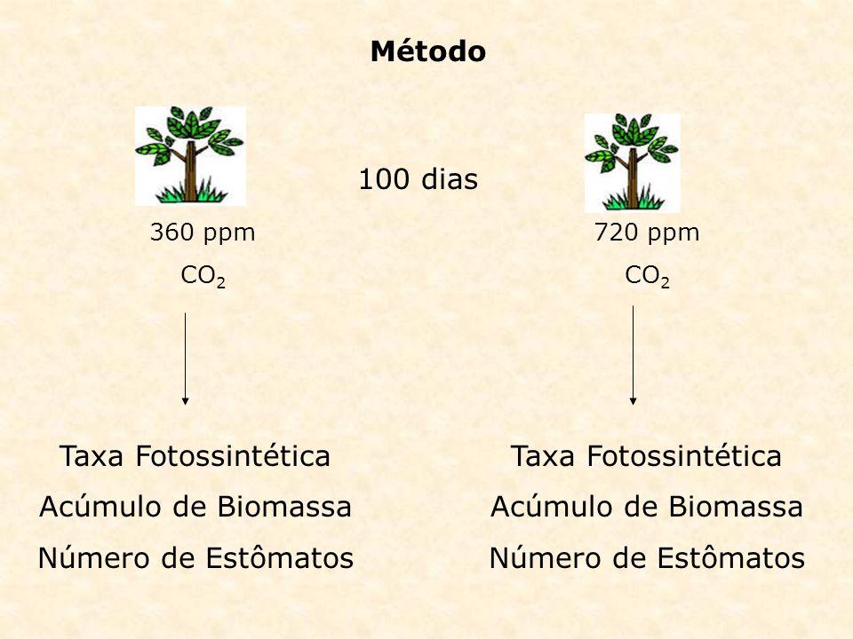 Método 100 dias Taxa Fotossintética Acúmulo de Biomassa