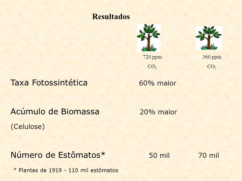 Taxa Fotossintética 60% maior