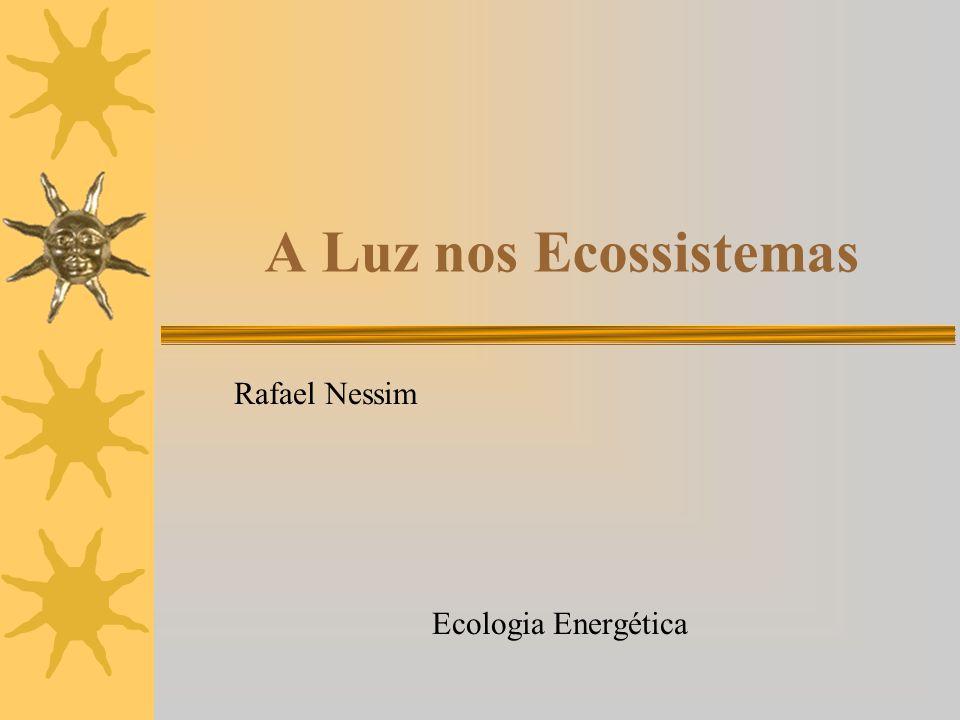 Rafael Nessim Ecologia Energética