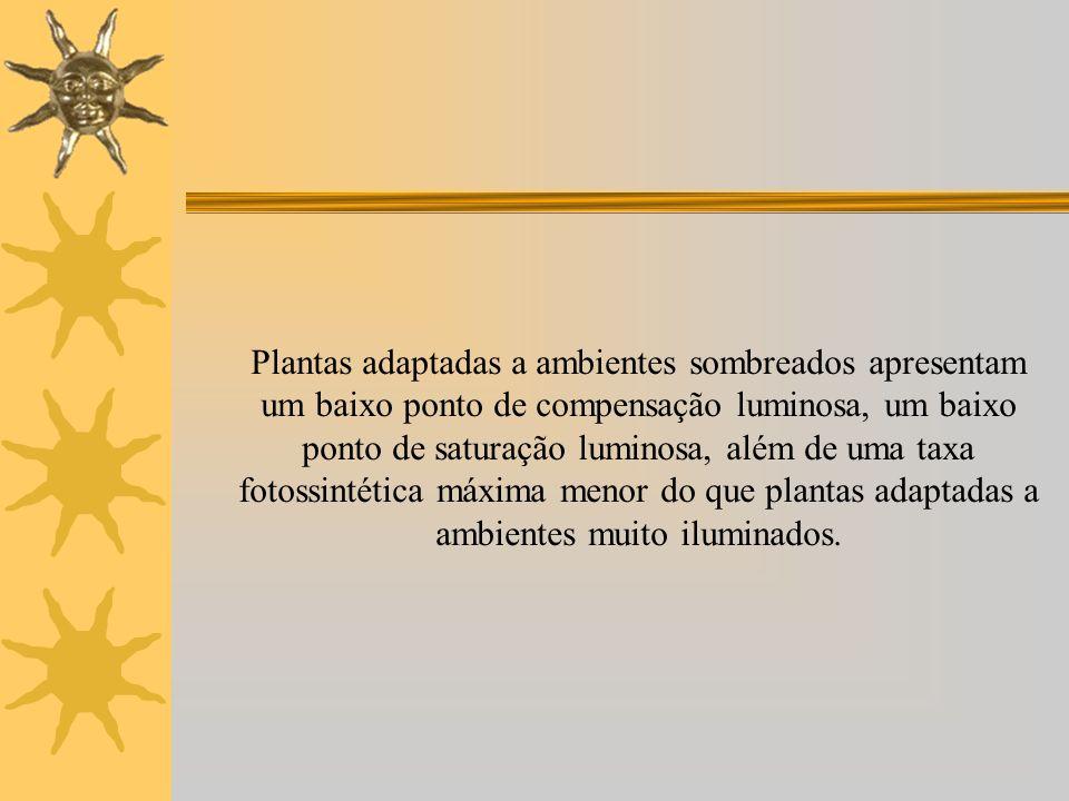 Plantas adaptadas a ambientes sombreados apresentam um baixo ponto de compensação luminosa, um baixo ponto de saturação luminosa, além de uma taxa fotossintética máxima menor do que plantas adaptadas a ambientes muito iluminados.