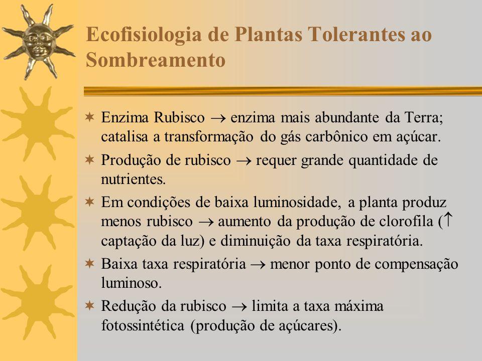 Ecofisiologia de Plantas Tolerantes ao Sombreamento
