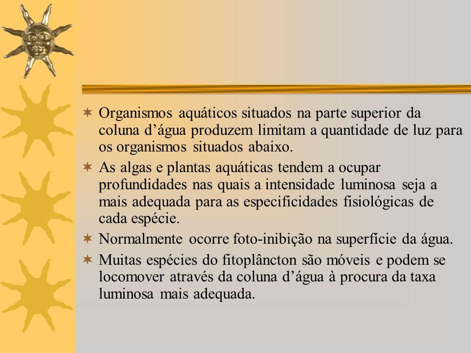 Organismos aquáticos situados na parte superior da coluna d'água produzem limitam a quantidade de luz para os organismos situados abaixo.