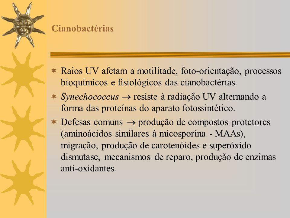 Cianobactérias Raios UV afetam a motilitade, foto-orientação, processos bioquímicos e fisiológicos das cianobactérias.