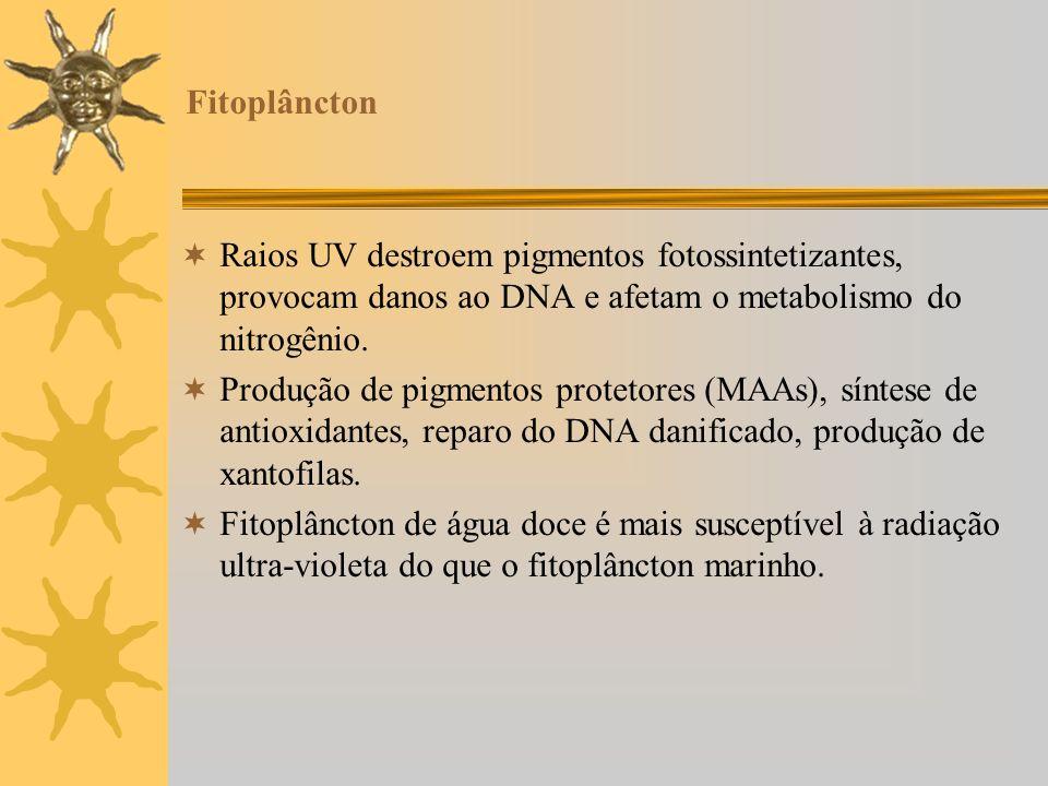 Fitoplâncton Raios UV destroem pigmentos fotossintetizantes, provocam danos ao DNA e afetam o metabolismo do nitrogênio.