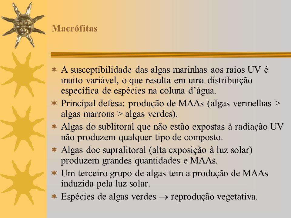 Macrófitas