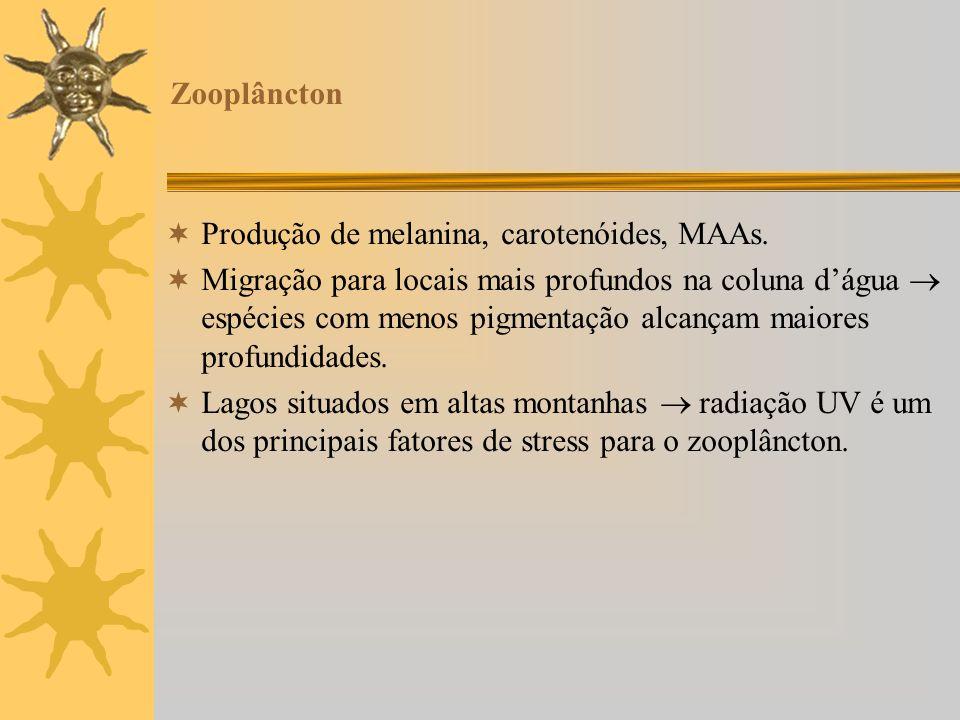 Zooplâncton Produção de melanina, carotenóides, MAAs.