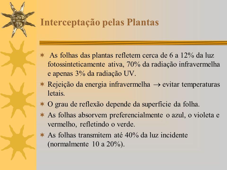 Interceptação pelas Plantas