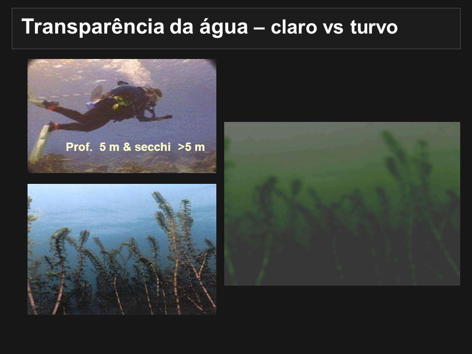 Transparência da água – claro vs turvo