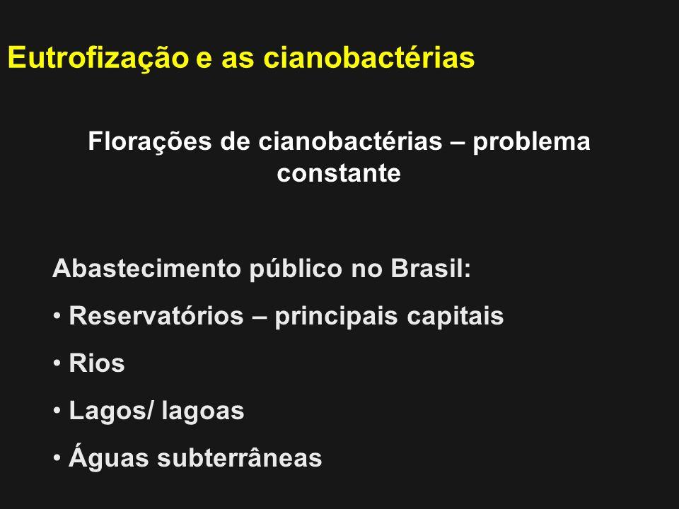 Florações de cianobactérias – problema constante