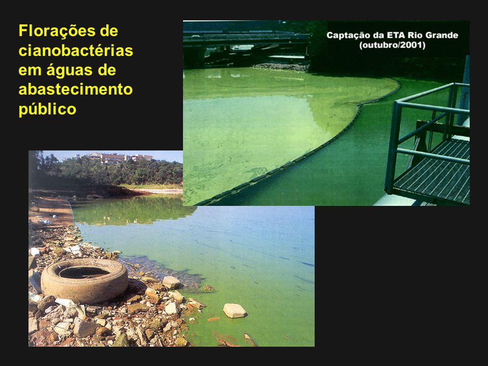 Florações de cianobactérias em águas de abastecimento público