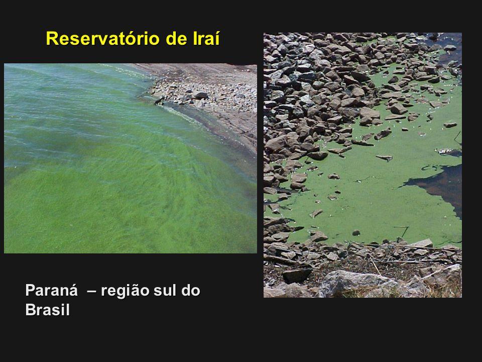 Reservatório de Iraí Paraná – região sul do Brasil