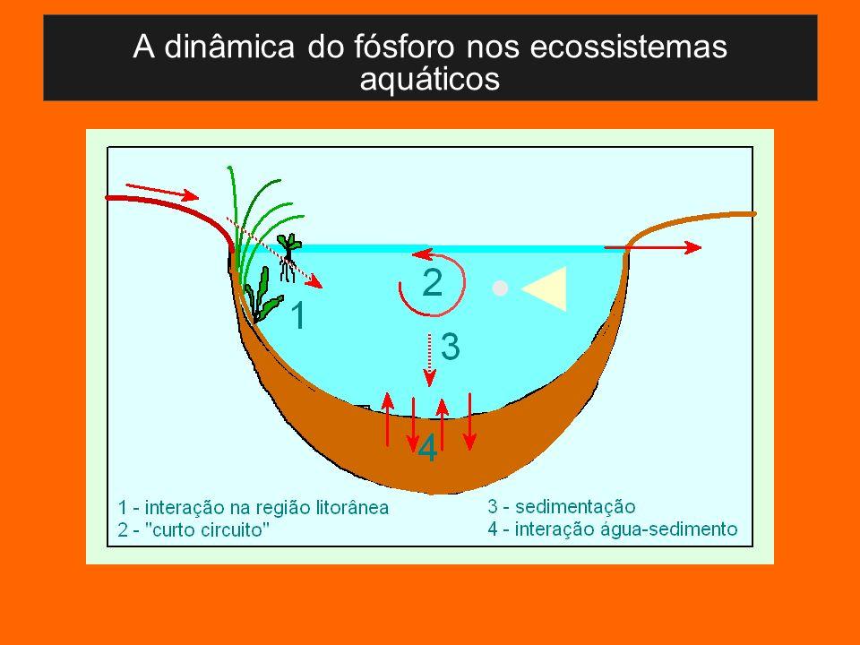 A dinâmica do fósforo nos ecossistemas aquáticos