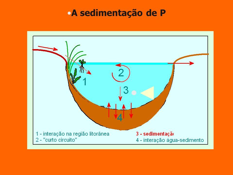 A sedimentação de P ◄
