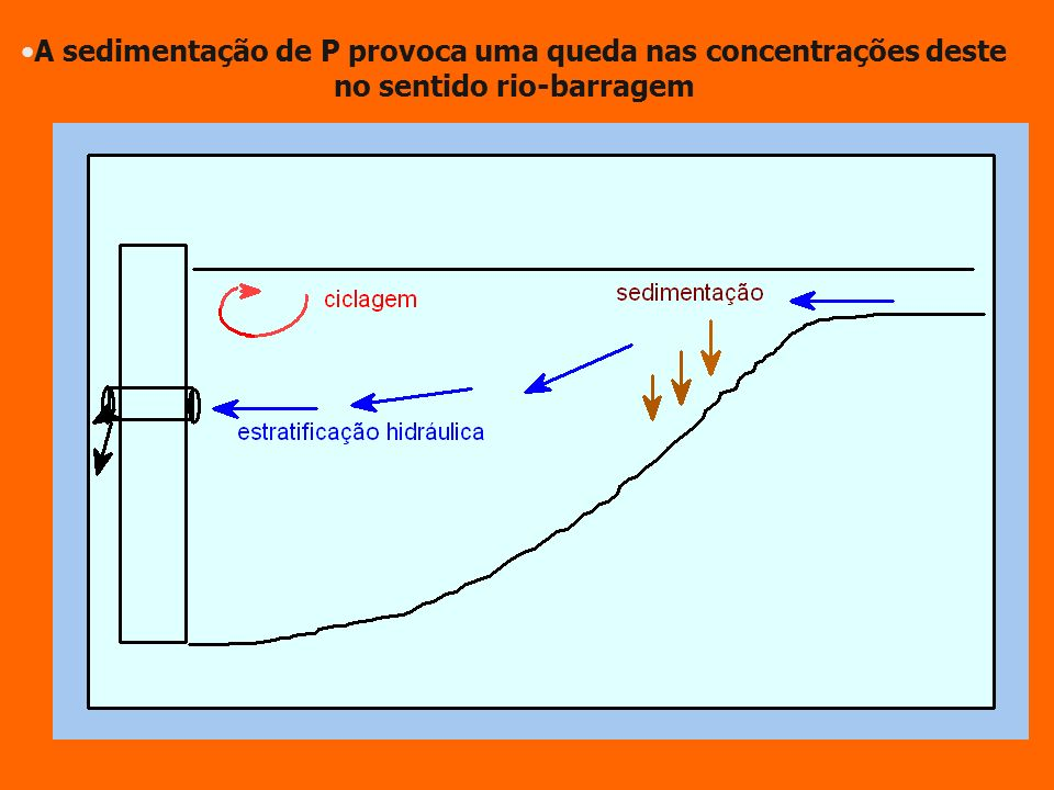 A sedimentação de P provoca uma queda nas concentrações deste no sentido rio-barragem