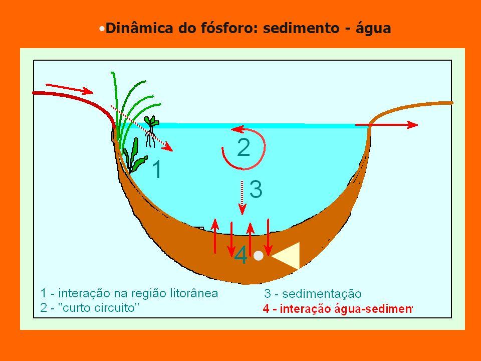 Dinâmica do fósforo: sedimento - água