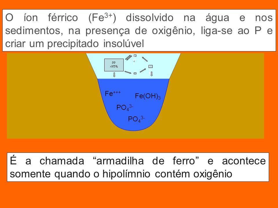 O íon férrico (Fe3+) dissolvido na água e nos sedimentos, na presença de oxigênio, liga-se ao P e criar um precipitado insolúvel