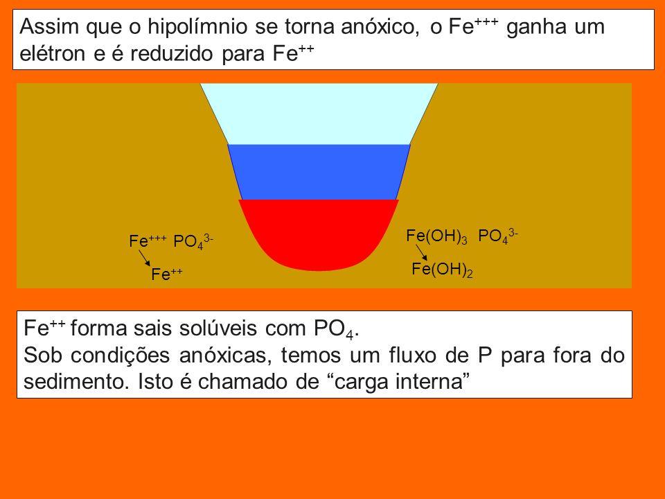 Fe++ forma sais solúveis com PO4.