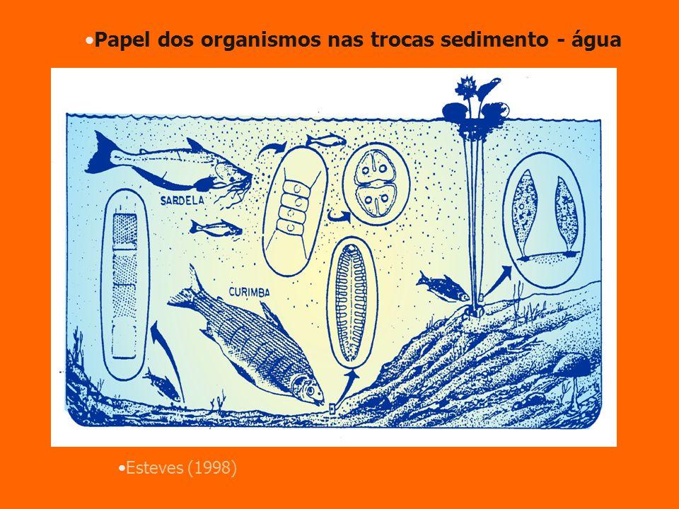 Papel dos organismos nas trocas sedimento - água
