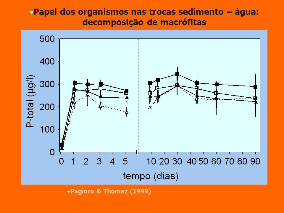 Papel dos organismos nas trocas sedimento – água: decomposição de macrófitas