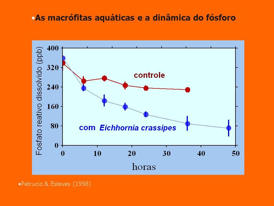 As macrófitas aquáticas e a dinâmica do fósforo