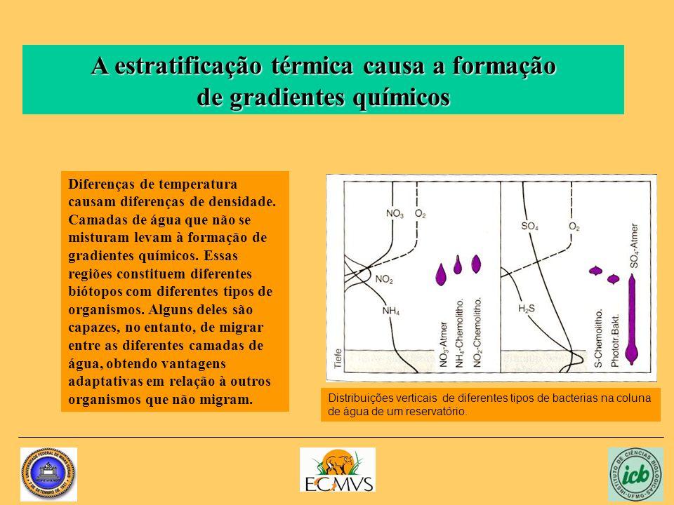 A estratificação térmica causa a formação de gradientes químicos