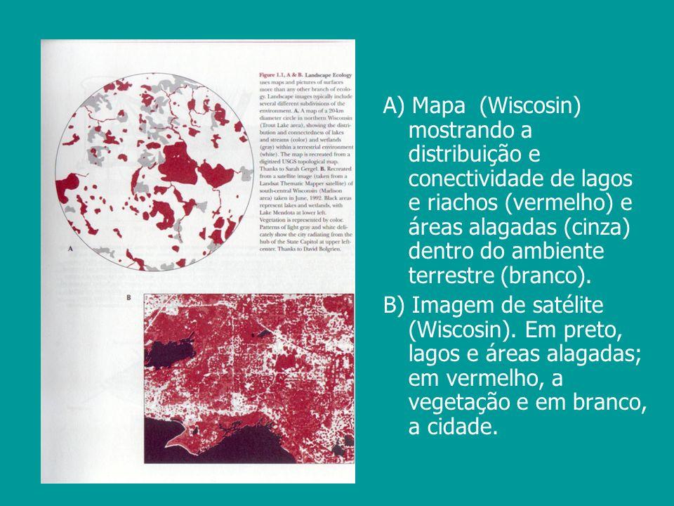 A) Mapa (Wiscosin) mostrando a distribuição e conectividade de lagos e riachos (vermelho) e áreas alagadas (cinza) dentro do ambiente terrestre (branco).