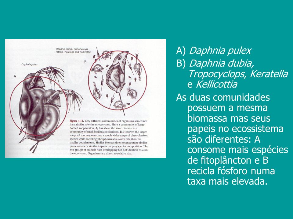 A) Daphnia pulex B) Daphnia dubia, Tropocyclops, Keratella e Kellicottia.