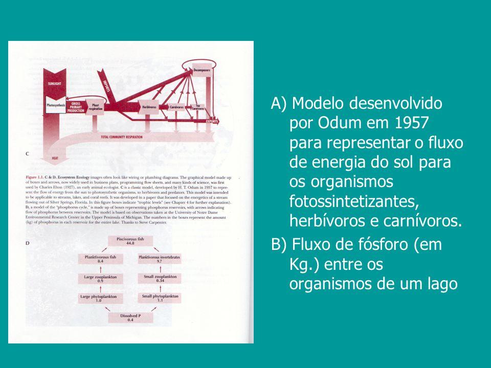 A) Modelo desenvolvido por Odum em 1957 para representar o fluxo de energia do sol para os organismos fotossintetizantes, herbívoros e carnívoros.