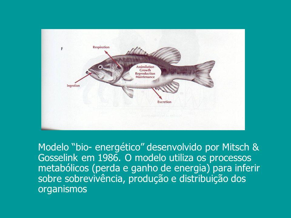 Modelo bio- energético desenvolvido por Mitsch & Gosselink em 1986