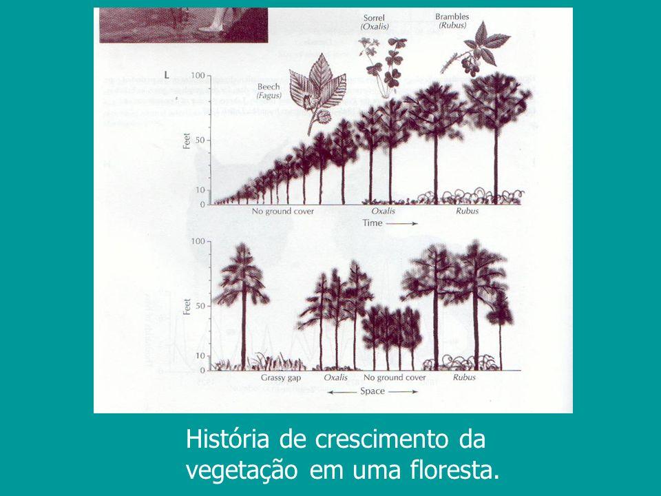 História de crescimento da vegetação em uma floresta.