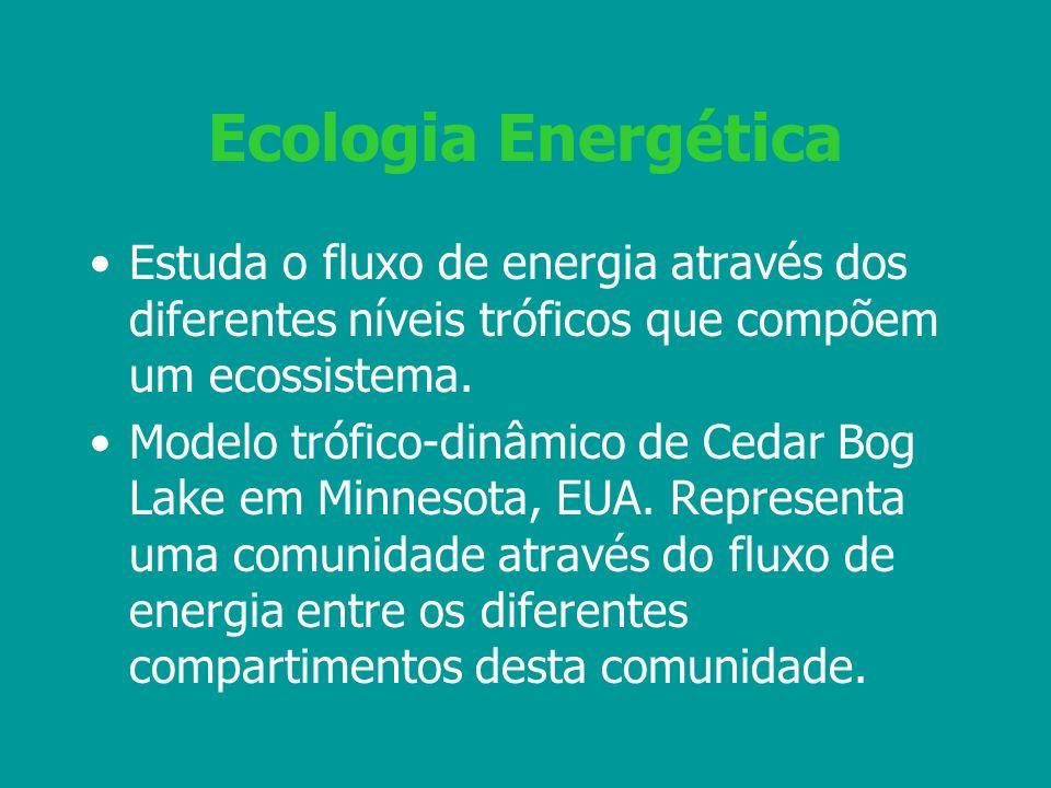Ecologia Energética Estuda o fluxo de energia através dos diferentes níveis tróficos que compõem um ecossistema.