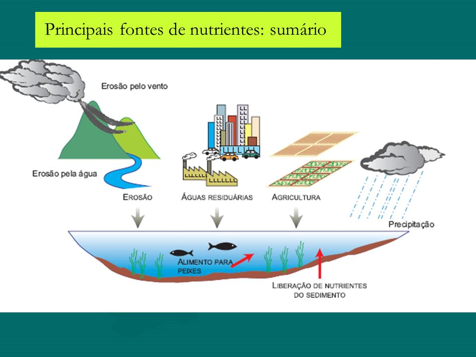 Principais fontes de nutrientes: sumário