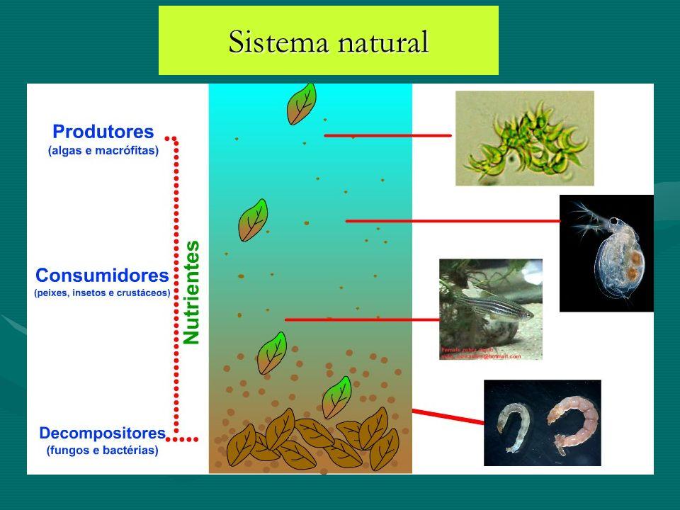 Sistema natural
