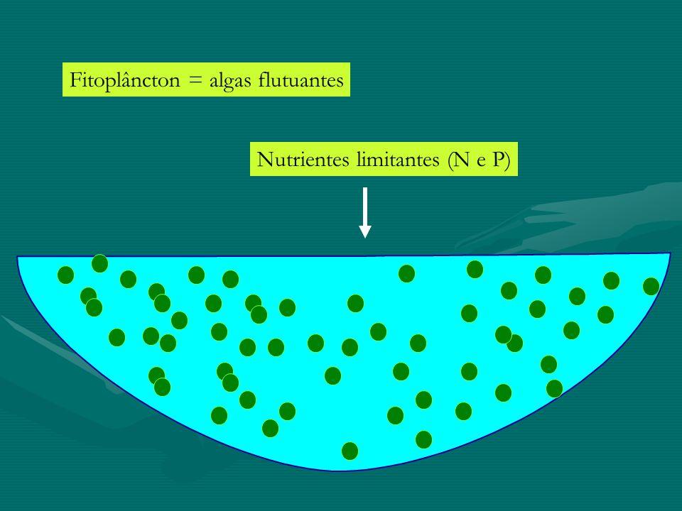 Fitoplâncton = algas flutuantes