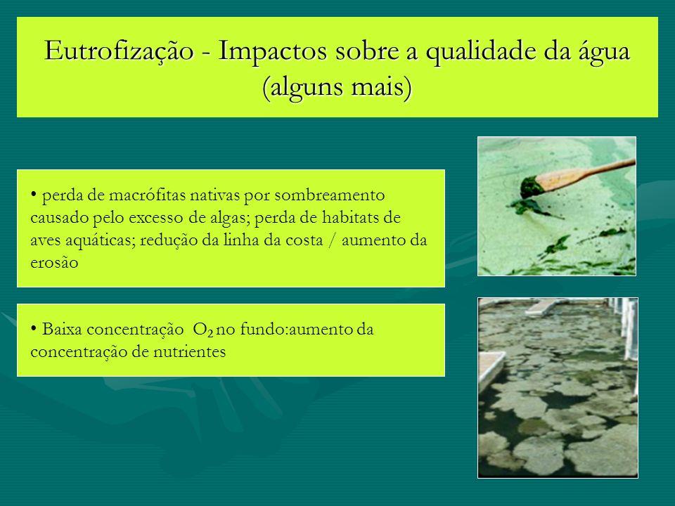 Eutrofização - Impactos sobre a qualidade da água (alguns mais)