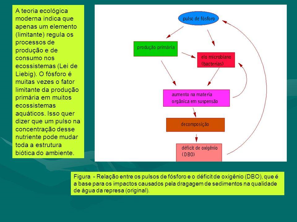A teoria ecológica moderna indica que apenas um elemento (limitante) regula os processos de produção e de consumo nos ecossistemas (Lei de Liebig). O fósforo é muitas vezes o fator limitante da produção primária em muitos ecossistemas aquáticos. Isso quer dizer que um pulso na concentração desse nutriente pode mudar toda a estrutura biótica do ambiente.