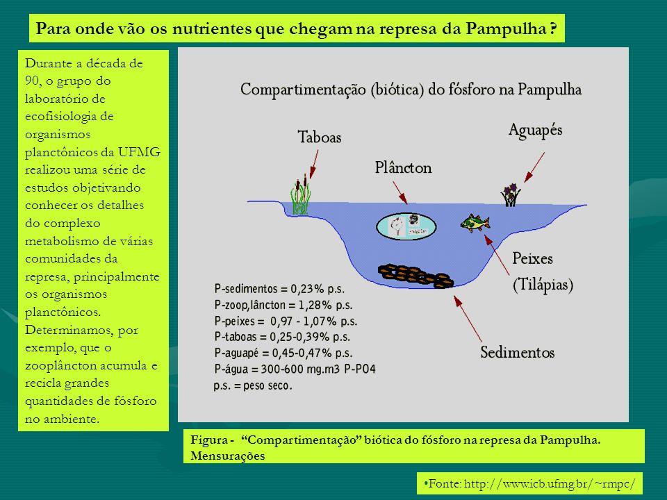 Para onde vão os nutrientes que chegam na represa da Pampulha