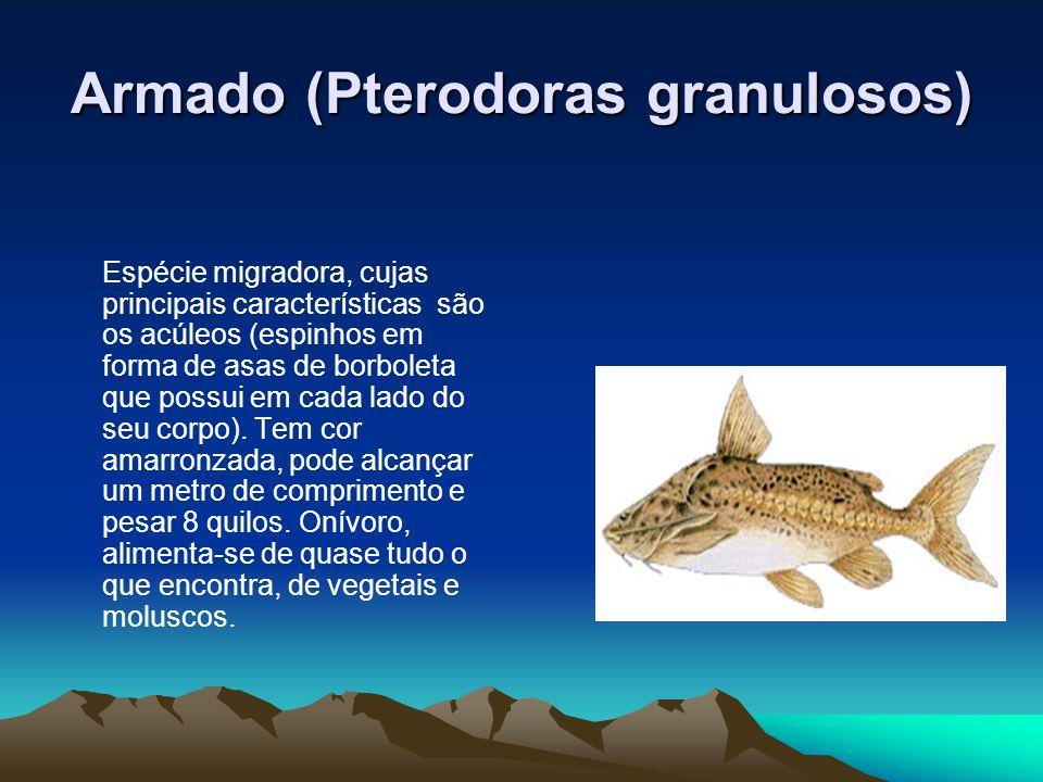 Armado (Pterodoras granulosos)