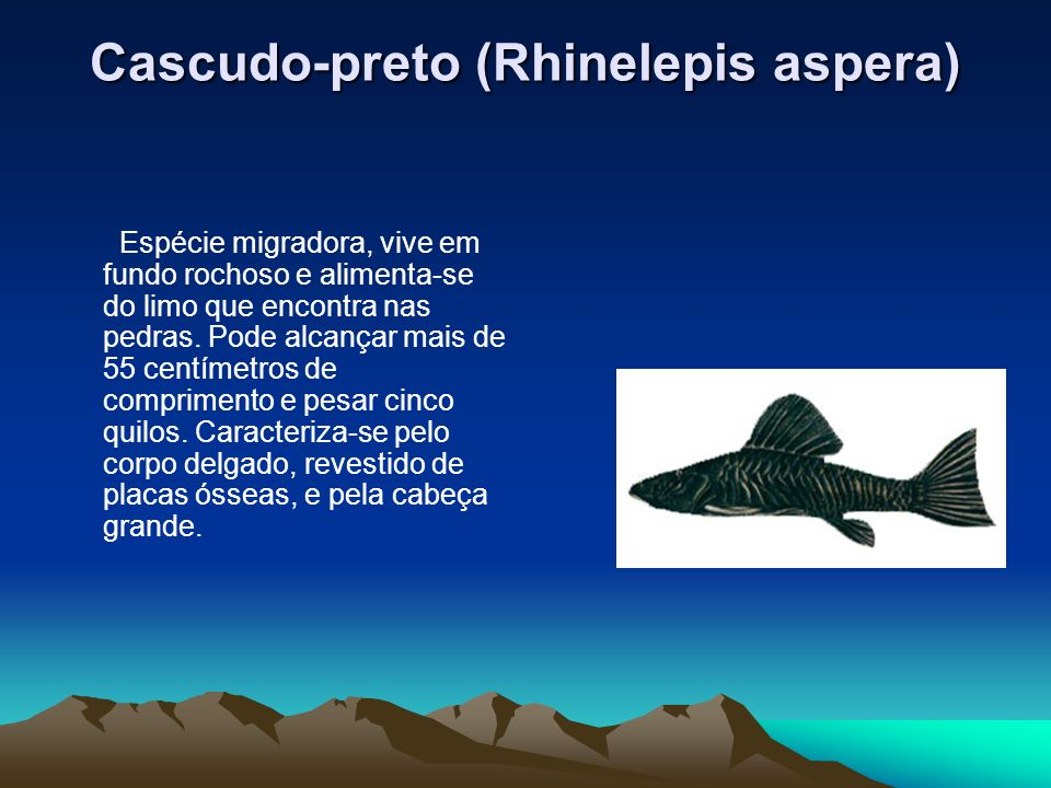 Cascudo-preto (Rhinelepis aspera)