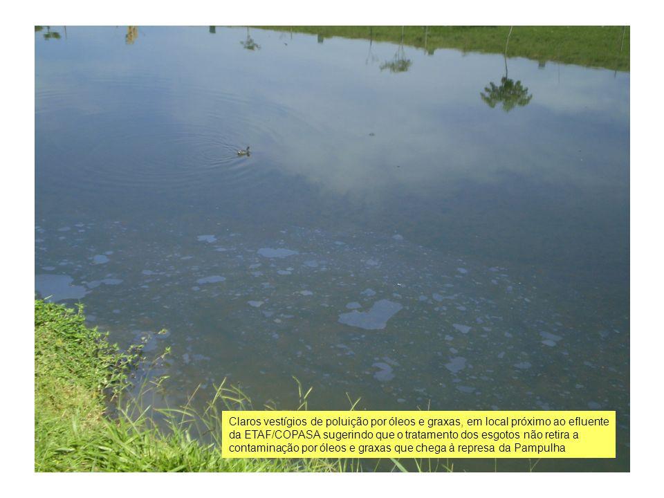 Claros vestígios de poluição por óleos e graxas, em local próximo ao efluente da ETAF/COPASA sugerindo que o tratamento dos esgotos não retira a contaminação por óleos e graxas que chega à represa da Pampulha
