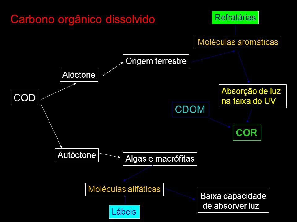 Carbono orgânico dissolvido