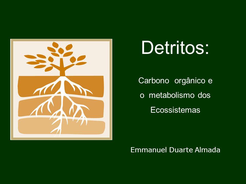 Emmanuel Duarte Almada