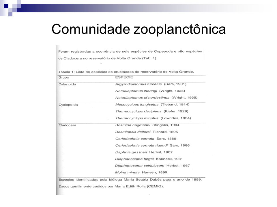 Comunidade zooplanctônica