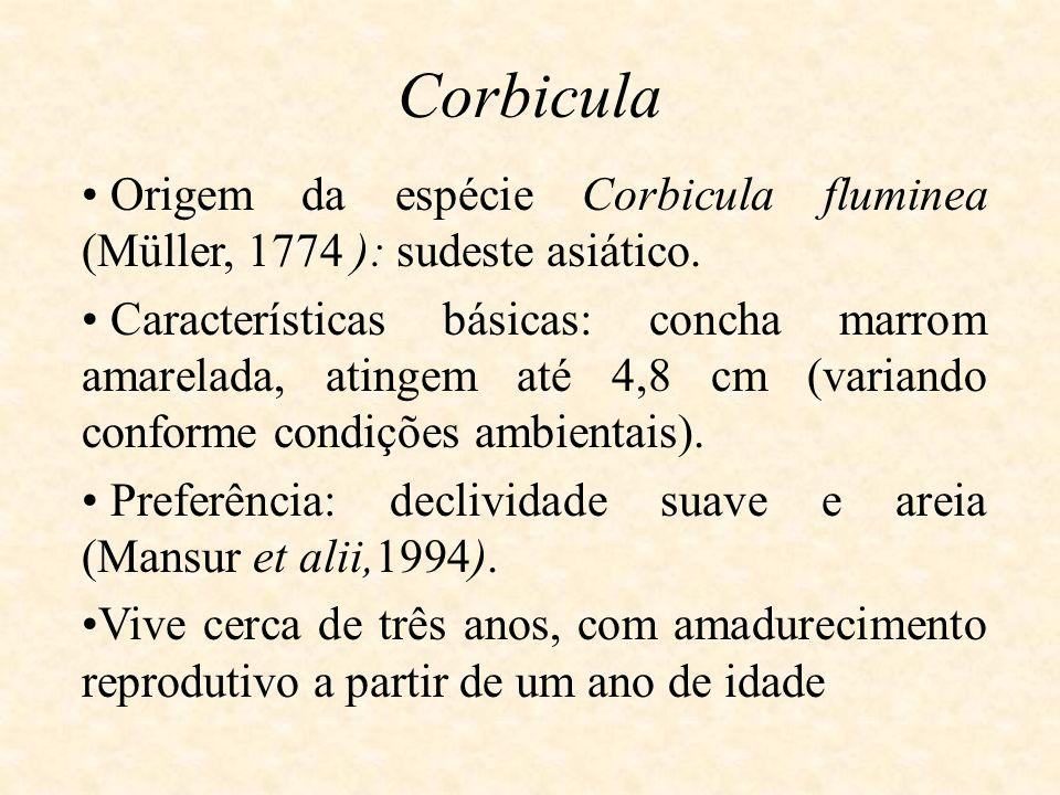 Corbicula Origem da espécie Corbicula fluminea (Müller, 1774 ): sudeste asiático.