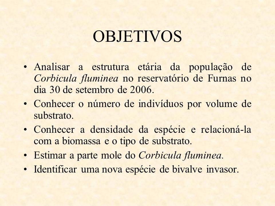 OBJETIVOS Analisar a estrutura etária da população de Corbicula fluminea no reservatório de Furnas no dia 30 de setembro de 2006.