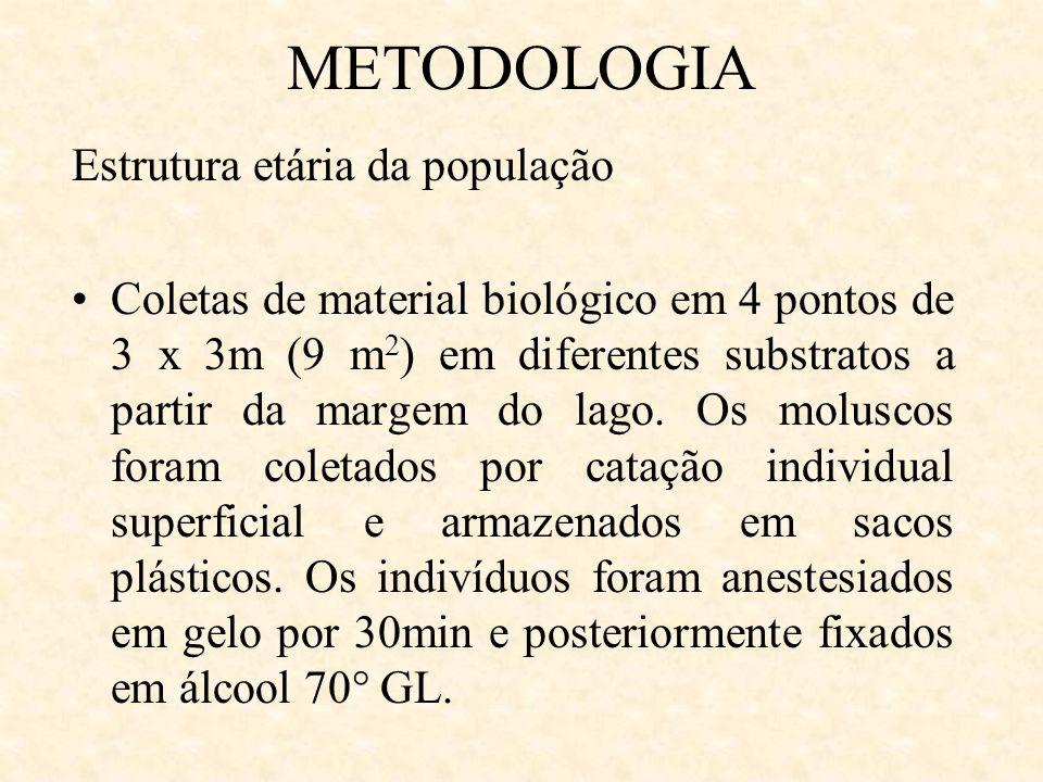 METODOLOGIA Estrutura etária da população